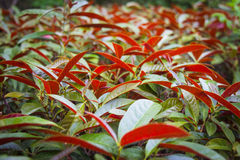 Foliage plant Royalty Free Stock Images