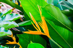 The foliage Plant Royalty Free Stock Images