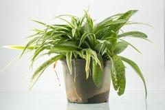Foliage plant Stock Photos