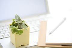 Foliage plant and personal computer Stock Photography