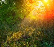 Foliage plants Royalty Free Stock Images
