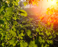 Foliage plants Royalty Free Stock Photo