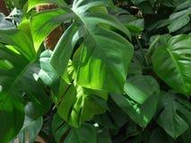Foliage plants. Dense vegetation of foliage plants Stock Image