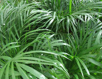 Foliage plants Stock Images