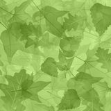 Foliage, plants, leaves, background, maple, maple Royalty Free Stock Photos