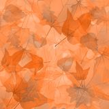 Foliage, plants, leaves, background, maple, maple Royalty Free Stock Images