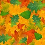 Foliage, plants, leaves, background, maple, maple Royalty Free Stock Photo