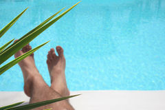 Foliage Pool Legs Stock Photography