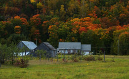 Foliage in quebec. Red and yellow foliage and house in quebec Stock Photos