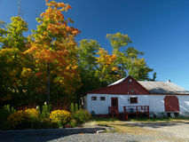 Foliage in quebec. Beautiful maple trees and farm enlighted by warm autum light Stock Photo