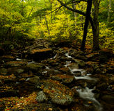 Foliage in quebec. Small river in a colorful forest in canada Stock Photography
