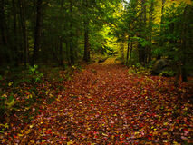 Foliage in quebec. Path of colorful leaves in a forest Stock Photography