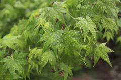 Foliage After Rain Stock Images