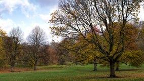 Foliage and ravens. St. James` Park, England stock photo