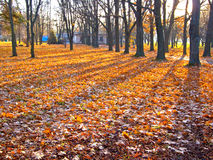 Foliage is in the rays of a rise sun Stock Photo