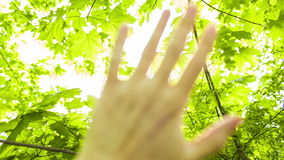 Foliage through the rays of sun. Foliage through the rays of the sun at sunset stock footage