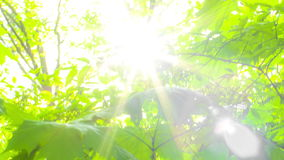 Foliage through the rays of sun. Foliage through the rays of the sun at sunset stock video footage
