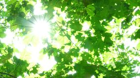 Foliage through the rays Royalty Free Stock Photos