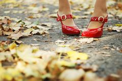 Foliage and red shoes Stock Photos