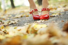 Foliage and red shoes. Woman's legs in a red patent-leather shoes in foliage Stock Image