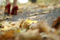 Foliage and red shoes Royalty Free Stock Photo