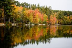 Foliage reflected in Lake. In Rural New England Stock Photography