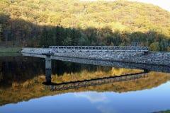 Foliage reflection Stock Images