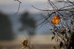 Foliage remains Royalty Free Stock Photo