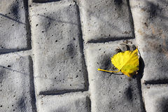 Foliage on the road. Fragment of a concrete surface with lying on it foliage Stock Images