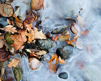 Foliage between rocks. Close up of oak and maple foliage between stone in frozen sea water Stock Photos