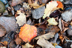 Foliage between rocks Stock Photo