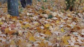 Foliage rustle stock video