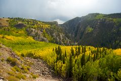 Foliage in the San Juan Mountains Royalty Free Stock Images