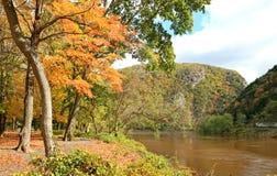 The foliage scenery Royalty Free Stock Photo