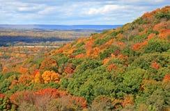 The foliage scenery Stock Photos