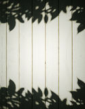 Foliage shadows Stock Photography