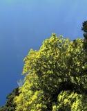 Foliage & Sky Stock Photos