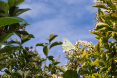 Foliage and sky background with butterfly. Royalty Free Stock Photo
