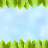 Foliage on sky background Royalty Free Stock Image
