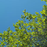 Foliage And Sky Stock Photo