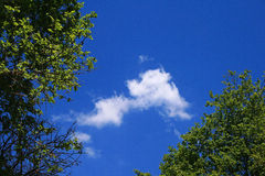 FOLIAGE WITH SMALL CLOUD IN BLUE SKY Stock Photos