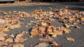 Foliage on the street Royalty Free Stock Image