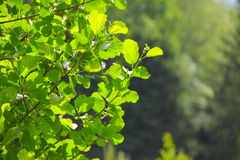 Foliage in sunlight Stock Images