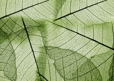 Foliage texture Royalty Free Stock Images