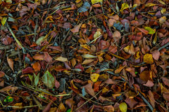 Foliage Texture. Shoot with canon 5d iii in Italy Royalty Free Stock Photos