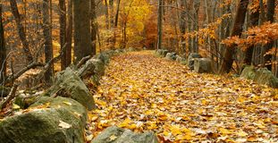 Foliage trail. Golden colored foliage in this autumn picture of park trail Stock Photography