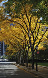 Foliage in a tree-line street in Manhattan. Foliage in a tree-line street in New York City Royalty Free Stock Photo