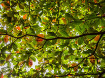 The foliage Royalty Free Stock Photography