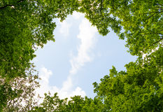 Foliage of tree in spring Royalty Free Stock Photos