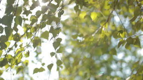 Foliage on the tree,  sun. Foliage on the tree  in the sun stock footage
